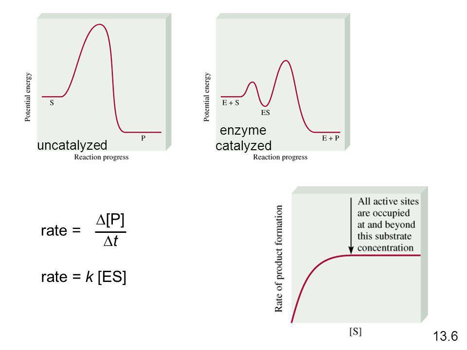 uncatalyzed enzyme catalyzed rate = D[P] Dt rate = k [ES] 13.6